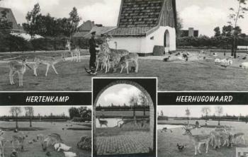 Deer-park Heerhugowaard (heerhugowaardsdagblad.nl)