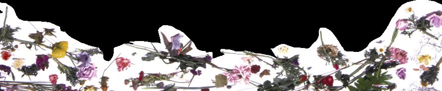 Prince Purple Rain Footer (officialprincemusic.com)